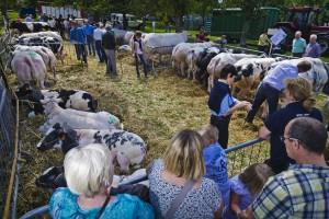 diverse loten voor de rundveeprijskamp___large