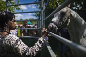 sfeerbeeld bij de paardenboxen_large