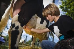 behaal-je-diploma-koeienmelken