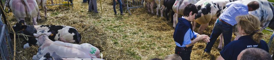diverse-loten-voor-de-rundveeprijskamp1